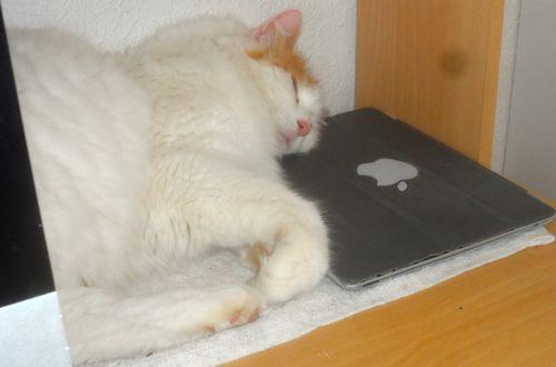 Sover på iPad